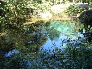 神の子池の写真・画像素材[1808624]