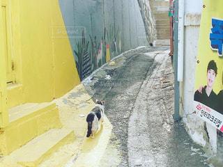 猫の散歩道の写真・画像素材[1806611]