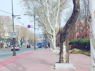冬の通り道の写真・画像素材[1806613]