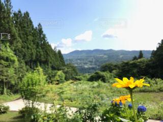 黄色い花の写真・画像素材[1808103]
