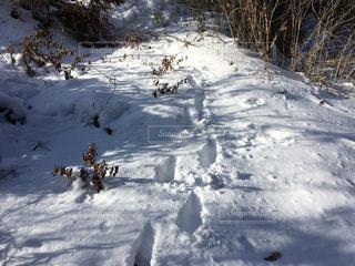 冬の足跡の写真・画像素材[1810246]