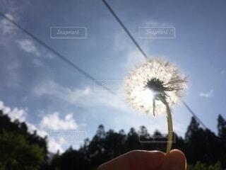 花のクローズアップの写真・画像素材[4661507]