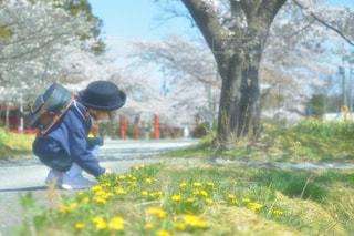 春のお散歩の写真・画像素材[1811060]
