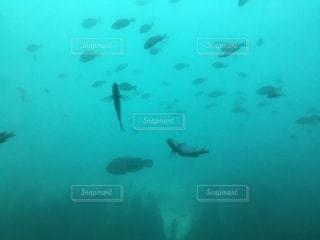 水中の魚たちの写真・画像素材[1812835]