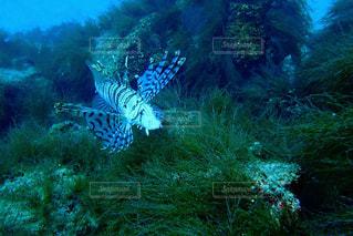 魚の写真・画像素材[2029705]