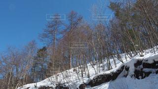 雪化粧の林の写真・画像素材[1811585]