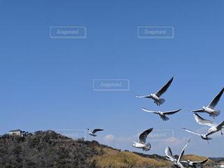 空を飛んでいるカモメの群れの写真・画像素材[1813772]