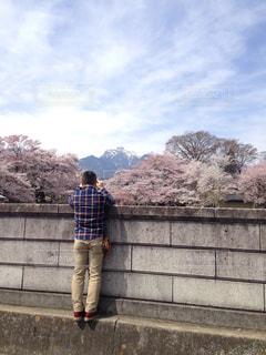 桜の写真を撮る人の写真・画像素材[1814436]