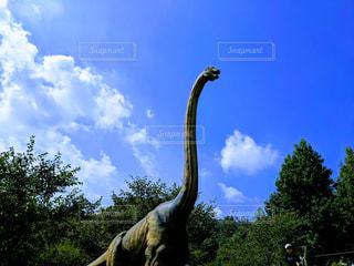 恐竜の写真・画像素材[2426319]