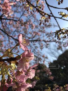 もうすぐ春ですねの写真・画像素材[1811377]