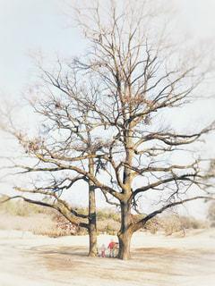 仲良しの樹の写真・画像素材[1821214]