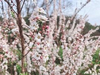 ピンクの小花の写真・画像素材[1856034]