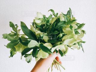 花束の写真・画像素材[1813676]