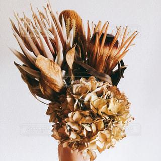 近くの花のアップの写真・画像素材[1814979]