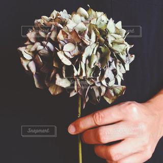 花を持っている手の写真・画像素材[1826913]