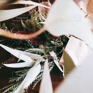 植物の接写の写真・画像素材[2140516]