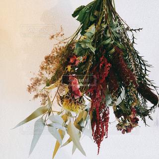 Dryflowerの写真・画像素材[2149890]