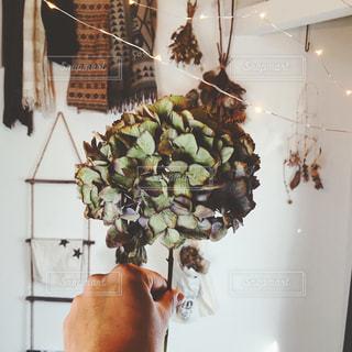 Dryflowerの写真・画像素材[2149896]