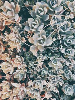 多肉植物の写真・画像素材[2149901]