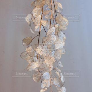 テーブルの上に座っている花で満たされた花瓶ルナリアの写真・画像素材[2742910]