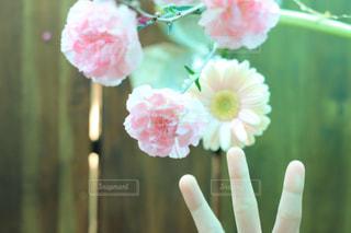 近くの花のアップの写真・画像素材[1851915]