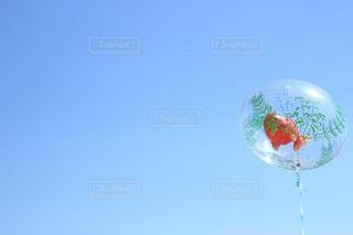 空を泳ぐ金魚の写真・画像素材[2185666]