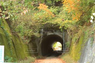 森の中のトンネルの写真・画像素材[1814190]