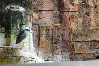 岩の上に座っている鳥の写真・画像素材[1815212]