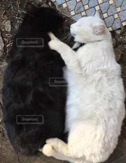寝てる2匹の写真・画像素材[1815307]