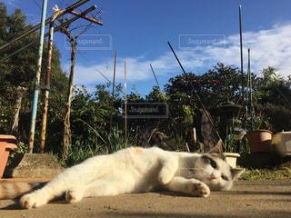 汚れフィールドの上に横になっている猫の写真・画像素材[1825228]