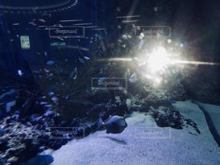 水族館の魚の写真・画像素材[1827934]