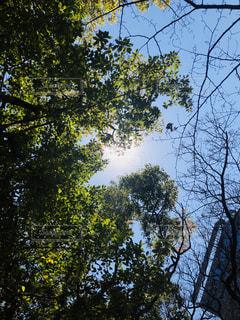 木と太陽の写真・画像素材[1846133]