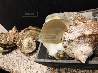 サザエの貝殻の写真・画像素材[2018153]