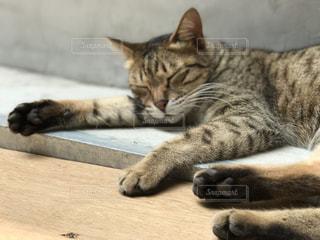 地面に横になっている猫の写真・画像素材[1816985]