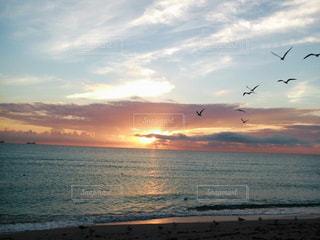 鳥と日の出の写真・画像素材[1833837]