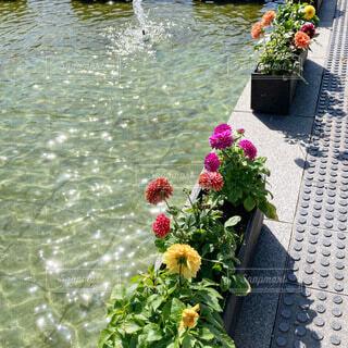 反射する水面の写真・画像素材[4845160]