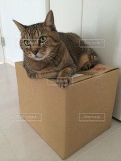 猫 - No.64656