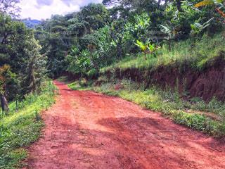 タンザニアの山道の写真・画像素材[1827826]