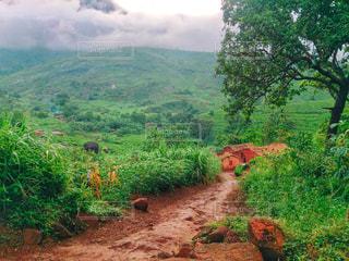 アフリカの村に繋がる道の写真・画像素材[1829006]