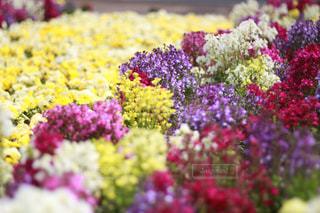 公園の花壇の写真・画像素材[1877710]