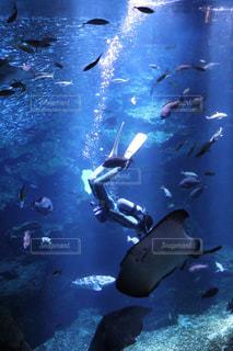 水族館の水槽とダイバーの写真・画像素材[2355053]