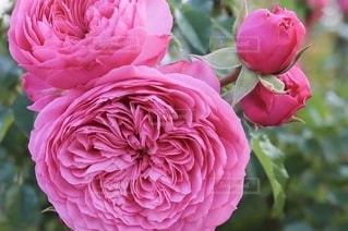 花のクローズアップの写真・画像素材[2734813]