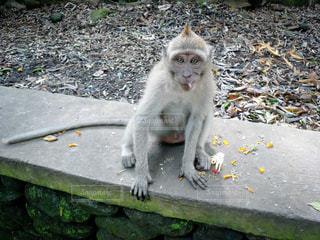 カメラ目線の猿の写真・画像素材[3143047]