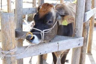 牧場の乳業の写真・画像素材[4015331]