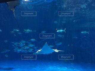 いおワールドかごしま水族館 水槽の写真・画像素材[1818715]