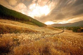 秋の仙石原の写真・画像素材[1819230]