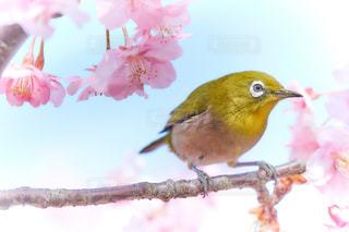 春の訪問者の写真・画像素材[1819508]