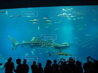沖縄美ら海水族館を背景に群衆の前でバンドを見ている人々のグループの写真・画像素材[2371542]