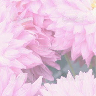 自然の写真・画像素材[62854]