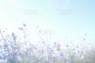空の写真・画像素材[265722]